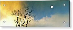 Silhouette Of A Solitary Bare Tree Acrylic Print by Panoramic Images