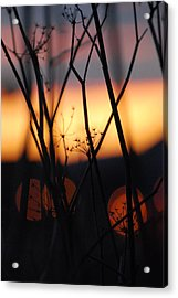 Acrylic Print featuring the photograph Silhouette Of Old Queens by Jani Freimann