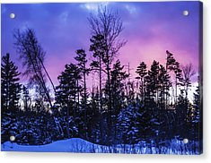 Silhouette Of Trees During A Colourful Acrylic Print by Jacques Laurent