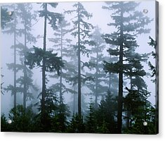 Silhouette Of Trees With Fog Acrylic Print
