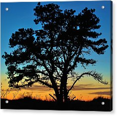 Acrylic Print featuring the photograph Silhouette by Paul Noble