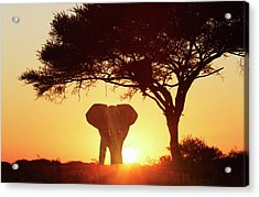 Silhouetted African Elephant At Sunset Acrylic Print by Lost Horizon Images