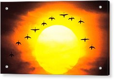 Silhouetted Birds In Sunset Acrylic Print by Panoramic Images