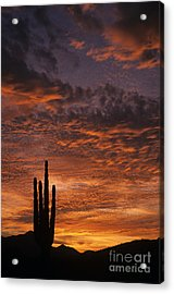 Silhouetted Saguaro Cactus Sunset At Dusk With Dramatic Clouds Acrylic Print