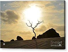 Silhouetted Tree At Dawn In Aruba Acrylic Print