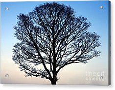 Silhouetted Tree Acrylic Print by Craig B