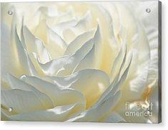 Silk Cream Floral Acrylic Print by Elaine Manley