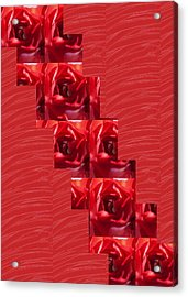 Acrylic Print featuring the photograph Silken Red Sparkles Redrose Across by Navin Joshi