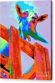 Acrylic Print featuring the photograph Silly Billy In Many Colors Photo Impressionism by Annie Zeno