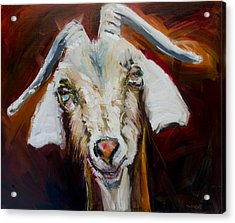 Silly Goat Acrylic Print
