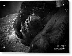 Deep In Thought Of Freer Times Acrylic Print