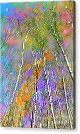 Silver Birch Acrylic Print by Michelle Orai