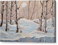 Silver Birch Acrylic Print