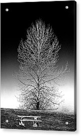 Silver Birch Acrylic Print by Phil Dyer