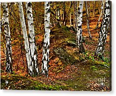 Silver Birch Tree Canvas Acrylic Print