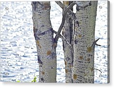 Silver Birch Trees At A Sunny Lake Acrylic Print by Heiko Koehrer-Wagner