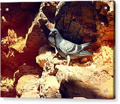 Silver Birds Acrylic Print