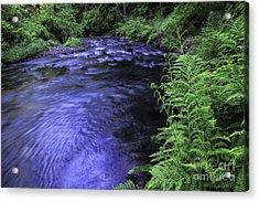 Silver Creek Acrylic Print