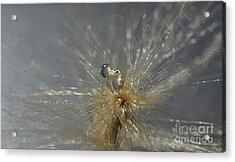Silver Drops Acrylic Print
