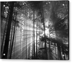 Silver Light Acrylic Print by Diane Schuster