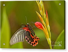 Silver Spotted Flambeau Acrylic Print by Nick  Boren