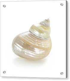 Silvermouth Shell Acrylic Print by Science Photo Library