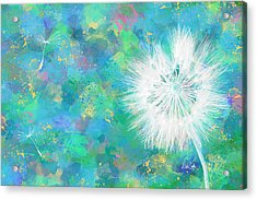 Silverpuff Dandelion Wish Acrylic Print by Nikki Marie Smith