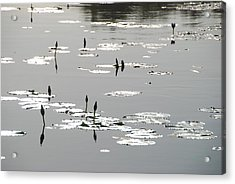 Acrylic Print featuring the photograph Silvery Lotus 2 by Ankya Klay