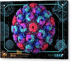 Simian Virus 40 Acrylic Print by Laguna Design/science Photo Library