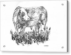 Acrylic Print featuring the drawing Simmental Bull by Larry Campbell
