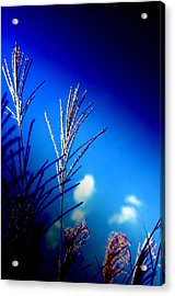 Simple Beauty  Acrylic Print by Walter  Holland