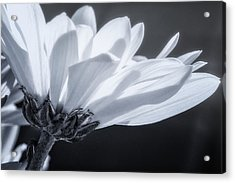 Simple Charm Acrylic Print