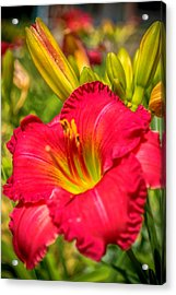 Simple Lily Acrylic Print
