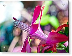 Simple Passion Acrylic Print