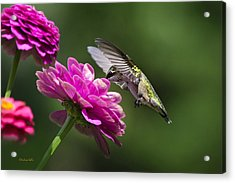 Acrylic Print featuring the photograph Simple Pleasure Hummingbird Delight by Christina Rollo
