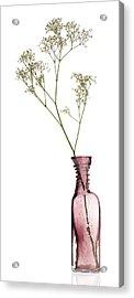 Simplicity Acrylic Print by Dave Bowman
