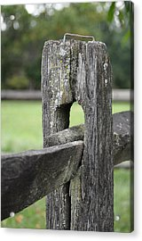 Simplicity Acrylic Print by Lisa Phillips