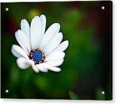 Simply Beautiful Acrylic Print by Tammy Smith