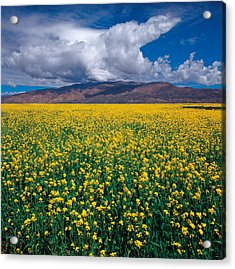 Acrylic Print featuring the photograph Simply Beautiful by Yue Wang
