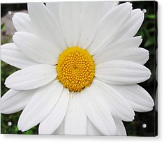Acrylic Print featuring the photograph Simply by Natalie Ortiz