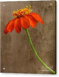 Simply Orange Acrylic Print