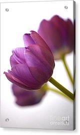 Simply Purple Acrylic Print by Deb Halloran