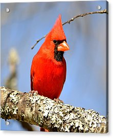 Simply Red Acrylic Print by Deena Stoddard