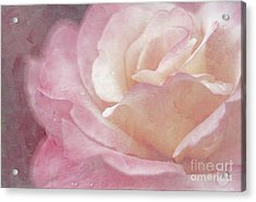 Simply Rose Acrylic Print by Darren Fisher