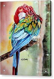 Sinbad Acrylic Print by Maria Barry