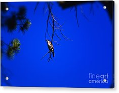 Sing For Me Acrylic Print by Timothy J Berndt
