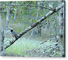 Acrylic Print featuring the photograph Singing In The Trees by Karen Horn