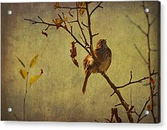 Acrylic Print featuring the photograph Singing Sparrow by Peggy Collins