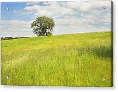Single Apple Tree In Maine Hay Field Acrylic Print by Keith Webber Jr
