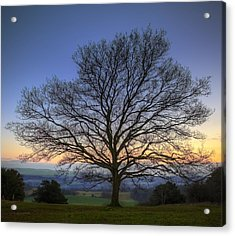 Single Bare Winter Tree Against Vibrant Sunset Acrylic Print by Matthew Gibson